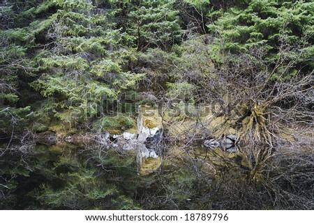 Reflections of a forest in Mendenhall Glacier national park (Juneau, Alaska).