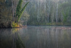 Reflections of a forest of poplars in the river in winter in Lugo galicia