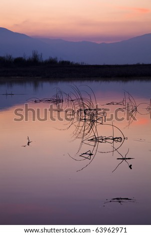 Reflections of reeds in the lake at sunset