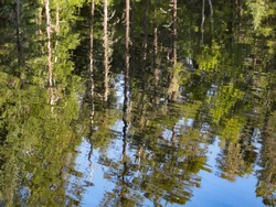 Reflections of Tall Trees and Blue Sky in a Wilderness Lake in the Boundary Waters Canoe Area Wilderness, Minnesota.