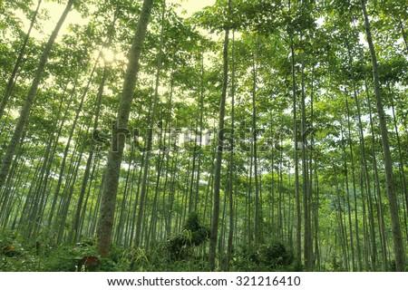 Reforestation for sustainable development, adding ozone to the world.