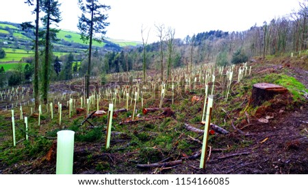 Reforestation of Protected Sustainable Deciduous tree