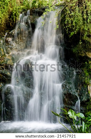 refreshing waterfall from mountain with green plant