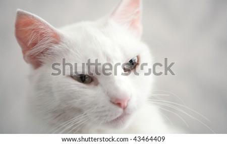 regal view of Princess Cat