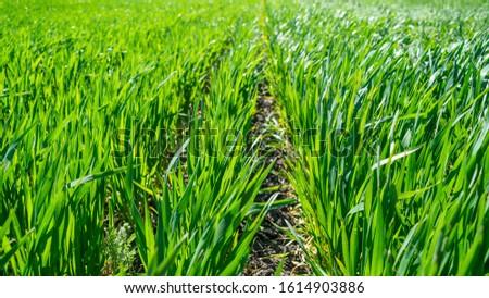 Regenerative Agriculture, Holistic Management, farming problem concept. Green wheat field background, grasslands. Stock foto ©