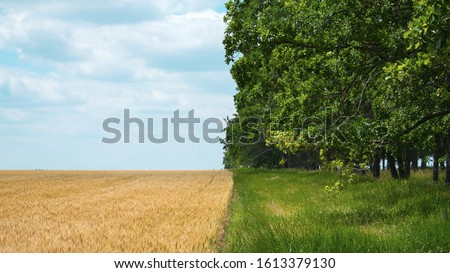 Regenerative Agriculture, Holistic Management, farming problem concept. Yellow field with a blue sky and a green forest with grass. Foto stock ©