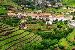 Regua in Douro valley. Portugal vineyard countryside landscape. Alto Douro DOC wine making landscape.