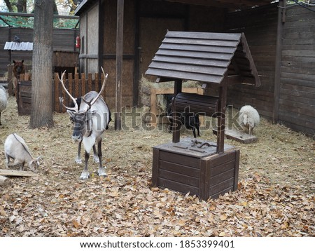 reindeer and other ungulates on the farm
