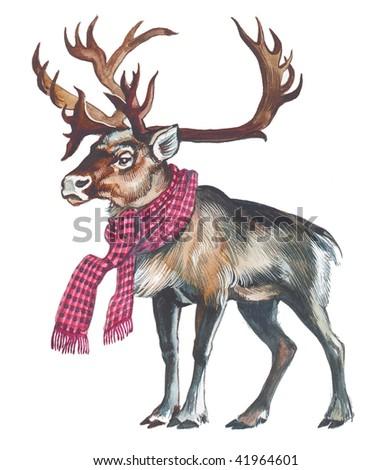 Reindeer (Caribou) - stock photo