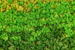 Reindeer green moss texture for decoration, creative background.