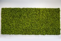 Reindeer moss wall, green wall decoration