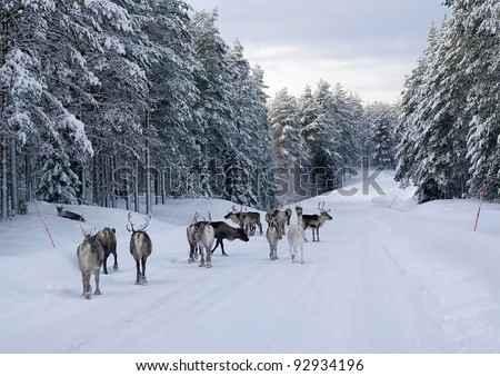 Reindeer on the road in northern Sweden in winter - stock photo