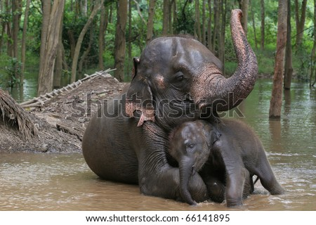 Relationship, Thai Elephant, Thailand
