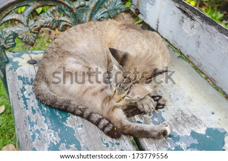 Relaxation of the Bengal cat
