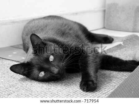 relaxed cat