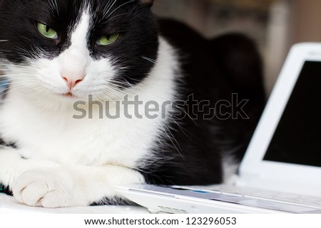 relaxed cat with laptop