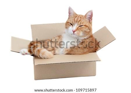 relaxing cute tomcat in box