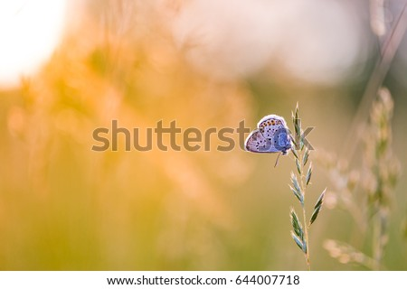 Relaxing nature meadow with sun rays and beautiful butterfly