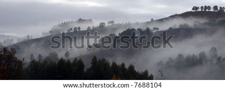 Relaxing panorama picture of a foggy forest scene. - stock photo