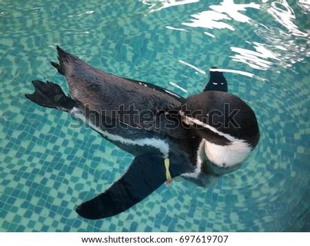 Relaxing penguin #697619707