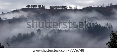Relaxing picture of a foggy forest scene.