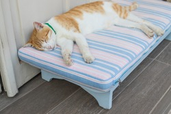 relaxing red cat,funny sleeping cat.red tabby cat sleeping on a wooden bench.portrait of a sleeping white with red cat pursed its paws.street red cat sleeps in the sun