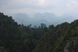 relaxing scenery with rainforest and mountains at dawn