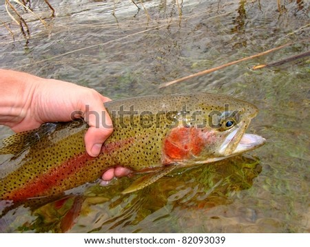 Releasing a Rainbow Trout, fly fishing on the Green River