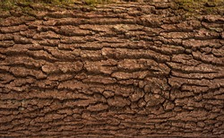 Relief texture of the brown bark of a tree with green moss on it. Horizontal photo of a tree bark texture. Relief creative texture of an old oak bark.
