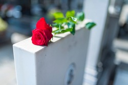Religious tradition to put one flower in memory, of the grave in the cemetery, tragedy and sorrow for the loss of a loved one. Red rose was left on gravestone in the graveyard