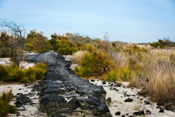 Remains of the Baltimore Boulevard in the Dunes of the Beach of Assateague Island,Virginia, USA