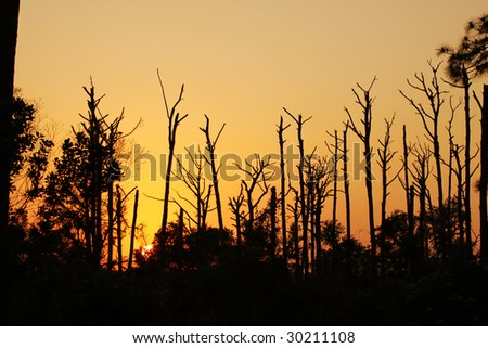 Remains of the dry trees in the forest global warming