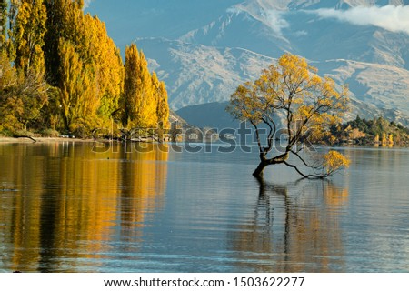 Remarkable landscape of colorful autumn Wanaka Tree reflection on Wanaka Lake with sunrise in the fresh morning, most popular photographed tree in South New Zealand. Stock fotó ©