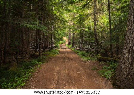 Remote, unpaved, winding country road in the dense forest. #1499855339