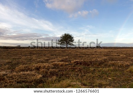 removed heather and rainbow on bare plain in evening light in Dwingelderveld, the Netherlands