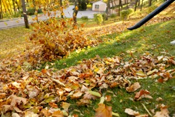 Removing autumn leaves with blower from lawn in park