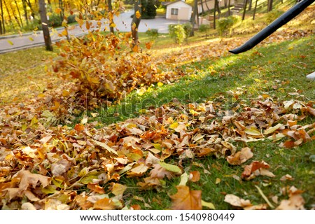 Removing autumn leaves with blower from lawn in park Stock photo ©