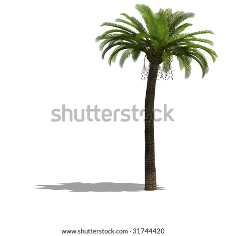 rendering of a tree with shadow and clipping path over white