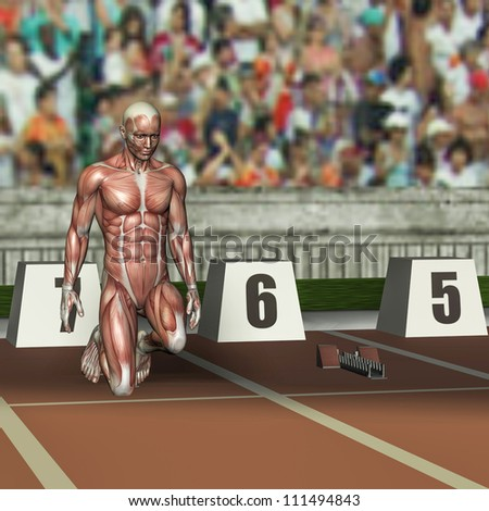 rendering of the muscle structure of an athlete at the starting block