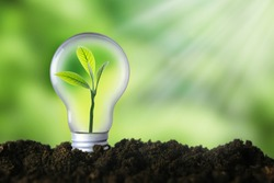 Renewable energy, sustainability, ecology concept. Light bulb with green plant inside over green background.