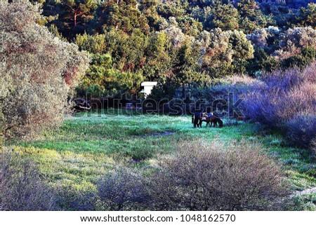 Rengarenk Doga Atlar? Stok fotoğraf ©
