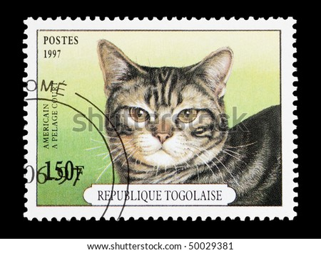 REP OF TOGO - CIRCA 1997: mail stamp printed in Togo featuring an American Shorthair cat, circa 1997