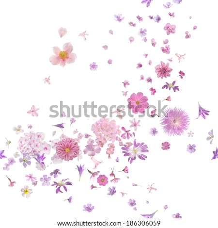 repeatable pink blossom breeze of many different flying flower buds and petals, in depth of field, isolated on absolute white