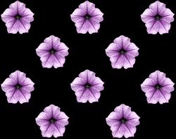 Repeating pattern of purple bloom petunia flowers with arranged zigzag on black background.