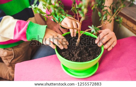 Small tree plant in a pot on hand women  Garden Images and