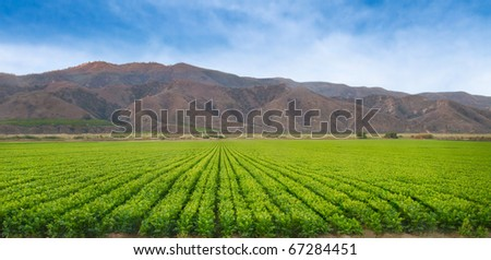 Representative of the California Agriculture Industry.