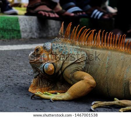 Reptile as pet (Car Free Day Malang) #1467001538