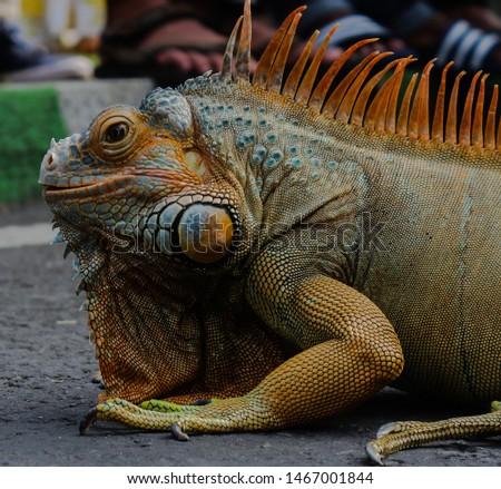 Reptile as Pet (Car Free Day Malang) #1467001844