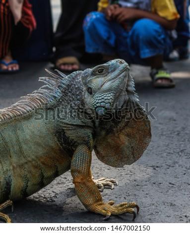 Reptile as Pet (Car Free Day Malang) #1467002150