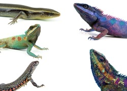 reptile collection isolated on white background